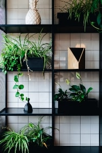 Decorating Ideas for hanging plants