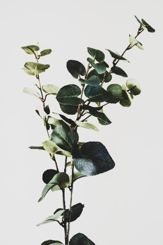 Artificial Plant made of Silk