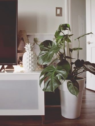 Furniture arrangement-home accessory and greenery
